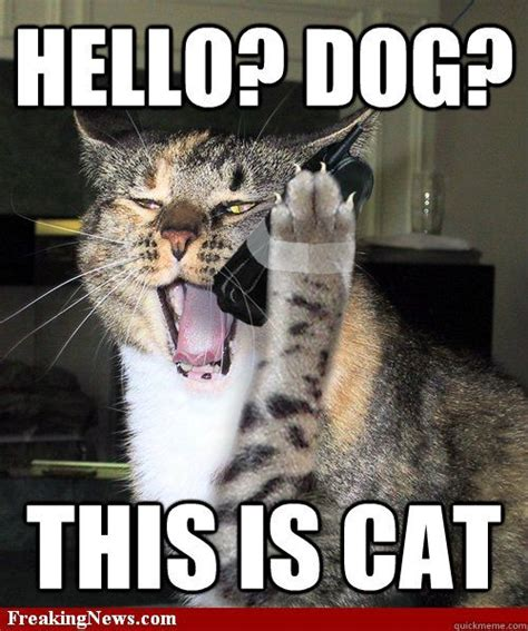 Dog On Phone Meme - dogs cats and cat cat on pinterest