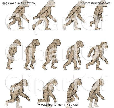 clipart of a set of homo habilis walking in motion in
