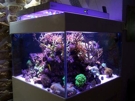 eclairage led eau de mer aquarium eau de mer