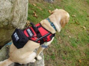 i want to service dogs do you need a vest for a service service certifications