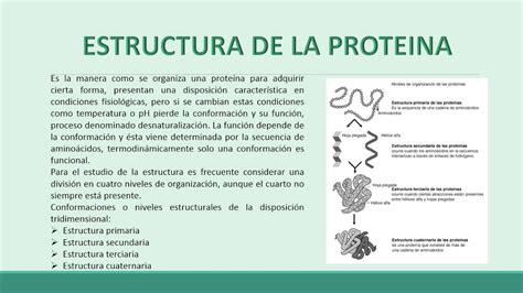 proteinas y acidos nucleicos las biomoleculas organicas carbohidratos lipidos