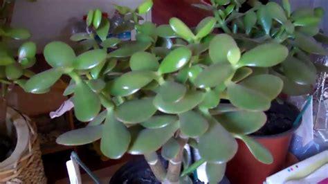good house plants 100 good house plant superb hardy indoor plants 115 hardy indoor plants au