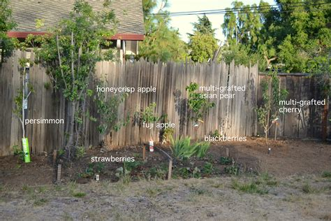 Trees To Plant In Backyard by Backyard Orchard Phase 2 A Growing Home Backyard