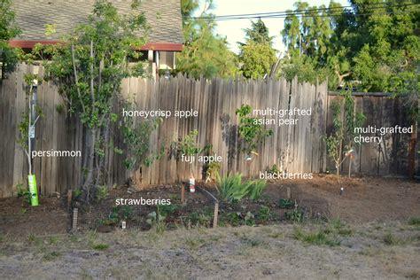 backyard orchard phase 2 a growing home backyard