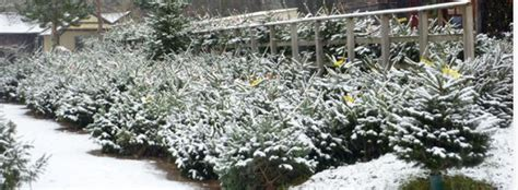 catsfield christmas tree farm