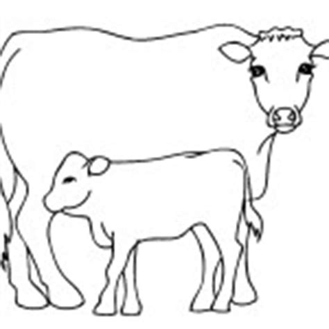 jersey cow coloring page cow coloring pages