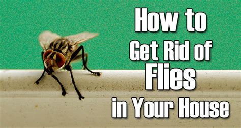 how to get rid of how to get rid of flies naturally