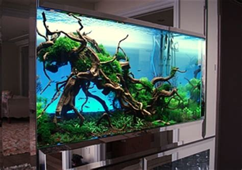 how to set up an aquascape image gallery large aquarium set up