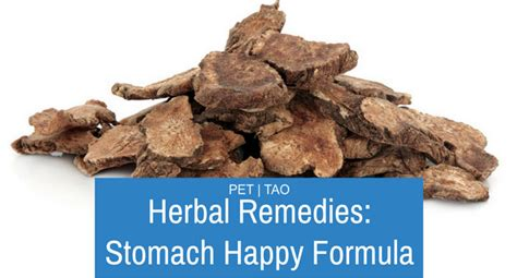 dogs stomach is stomach happy relief for stomach ulcers