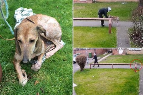 shivering and lethargic tear moment sick and shivering up and dumped by shameless owner who