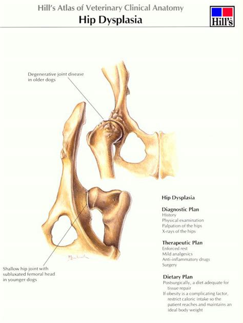 rottweiler excessive scratching bhvg benign bone tumour benign bone tumour in a your dogsnake bite black symptoms