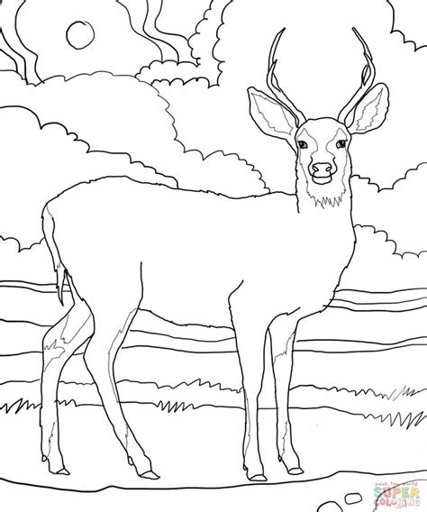 white tailed deer coloring page az coloring pages