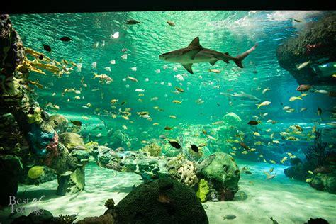 capsella katharine aquarium toronto ripleys aquarium bestoftoronto 2013 020