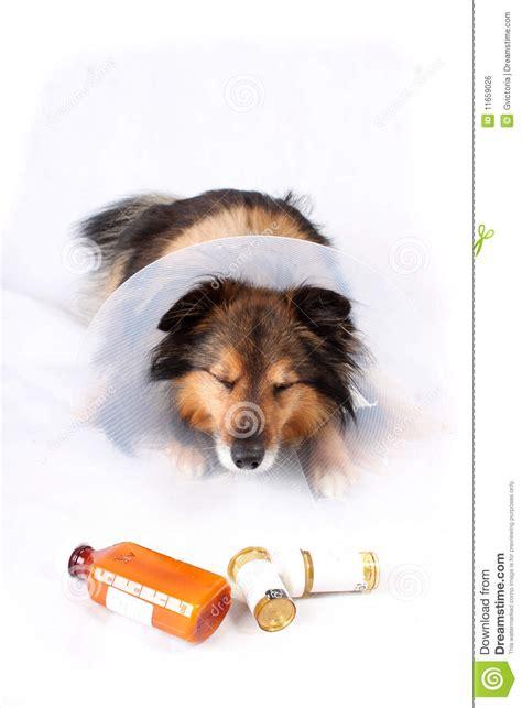 puppy lethargic not sick royalty free stock image image 11659026