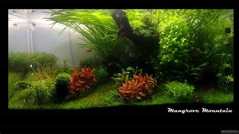 aquascape light calculator mangrove mountain flowgrow aquascape aquarium database
