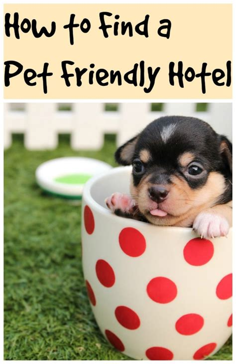 hotel chains that allow dogs how to find a pet friendly hotel travel thrifty mommas tips