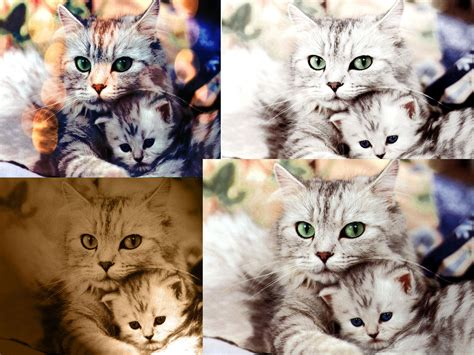 cat wallpaper collage my work zainahs blog