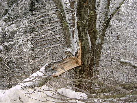 home insurance and fallen trees is your fallen tree covered by maine homeowners insurance blog noyes hall allen
