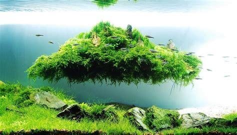 top   examples  aquascaping nature aquarium