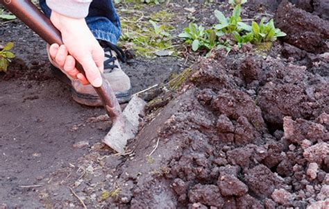 Soil Preparation For Vegetable Garden 6 Expert Tips To Prepare A Garden Bed For