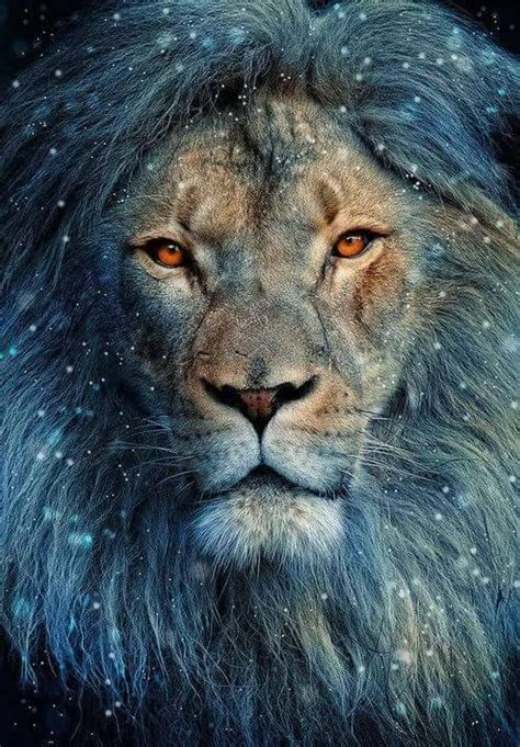 imagenes de leones tumblr leon rasta tumblr