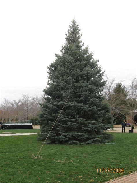 christmas tree farms in southeast michigan best 28 green acres tree farm best 28 tree farms in southeast michigan