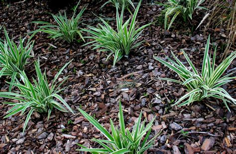 6 benefits of mulching in orange county overwatering is out