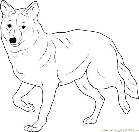 coyote coloring page free coyote coloring pages
