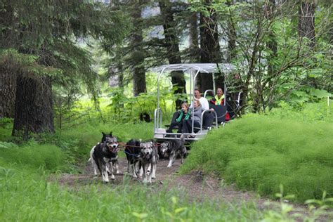 sled tours alaska everything you need to about alaska sled tours turning heads kennel