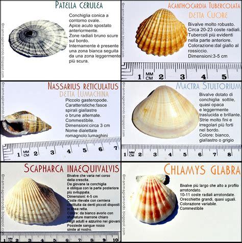 della driatico speciale mare impariamo a riconoscere le conchiglie