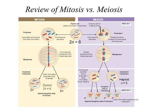 2n 6 meiosis diagram meiosis 1 2n 6