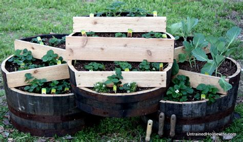 Strawberry Barrel Planter by Pioneering Today How To Plant Strawberries K Norris