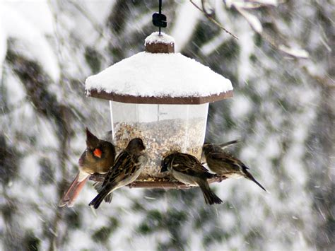 Bird Feeders In Winter best bird feeders for winter 2 bird cages