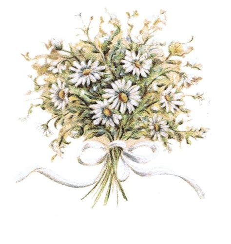 Wedding Bouquet Illustration by Bouquet Illustration Wedding Daisies