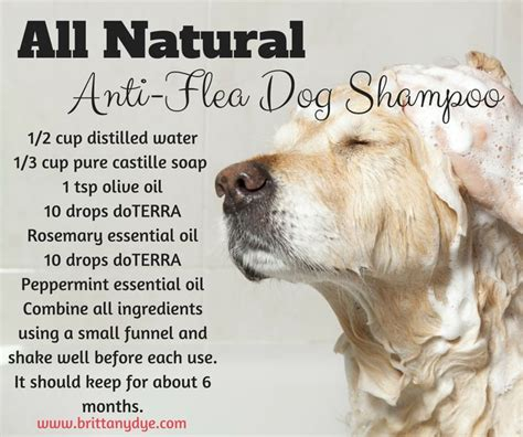 essential oils for dogs 17 best ideas about shoo on diy shoo shoo