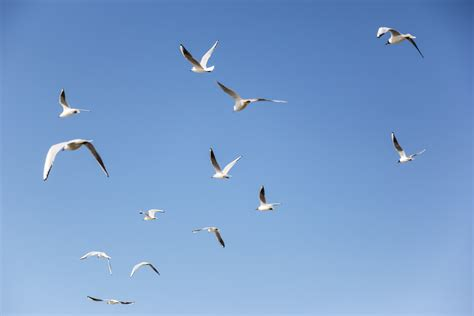 azeem azeez photos seagulls disperse