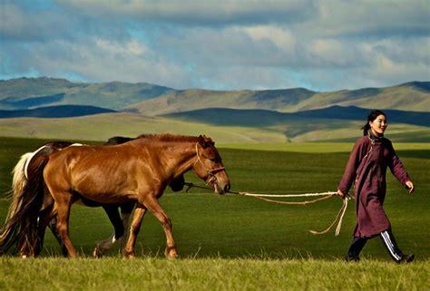 mongolian horse info origin history pictures horse