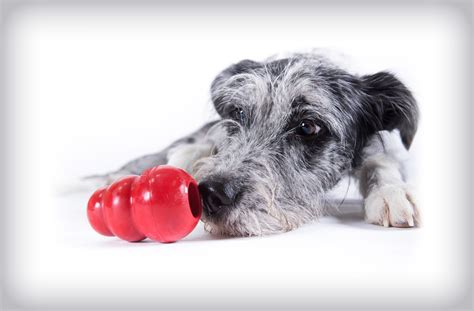 toys to keep dogs busy the best puzzle toys to keep your busy tully s