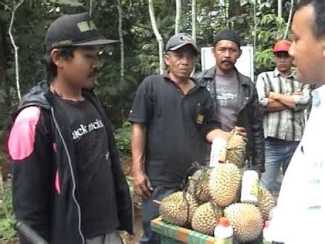 Jual Bibit Durian Bawor Nugroho hubungi bpk nugroho 0813 1460 0094 jual bibit durian