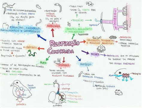anna mitose e meiose desconversa mapa mental respira 231 227 o comparada