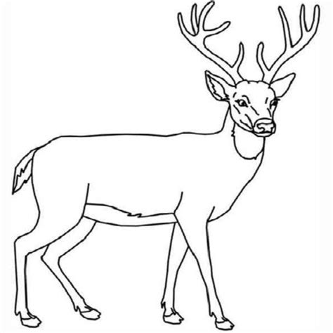deer head coloring pages coloring pages
