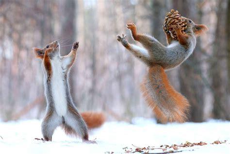 imagenes sorprendentes de animales salvajes 50 impactantes fotos de animales salvajes tomadas en el