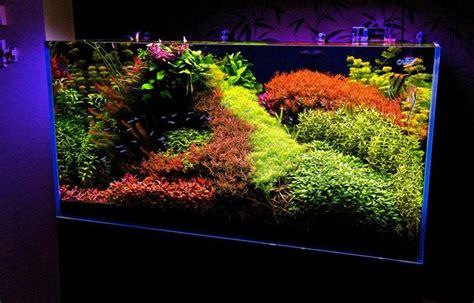 japanese aquascape artist 35 best images about aquariums on pinterest plants 50