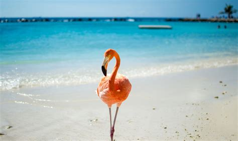 beach her colors were pink lots of pink with her love of the beach surprisingly ancient species vol 1 pre tend be curious
