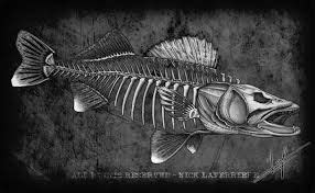 northern pike skeleton google search  pinterest