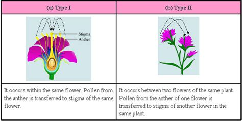why is sexual reproduction better than asexual reproduction sexual reproduction in flowering plants biology4isc