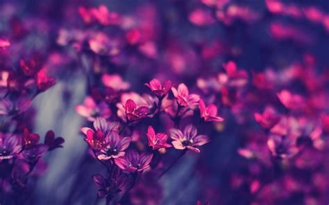 10 gorgeous widescreen flower wallpapers dezineguide