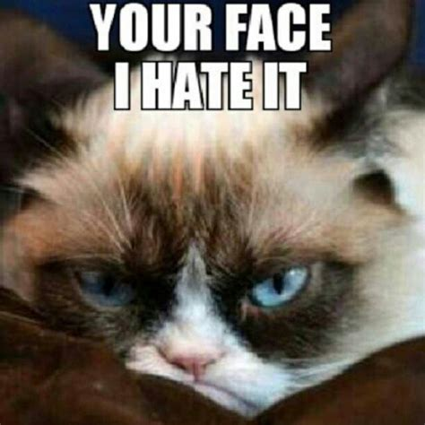 Grumpy Old Lady Meme - 1000 images about grumpy cat on pinterest memes humor