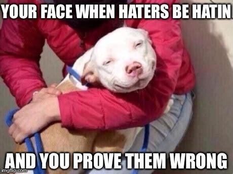 pit bull memes youll find  cute sayingimagescom
