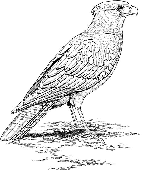 realistic bird coloring pages only coloring pages